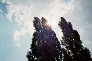 imm036_34A
